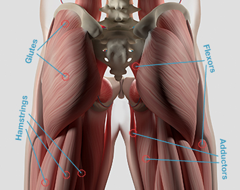 hip-stretches-anatomy-350